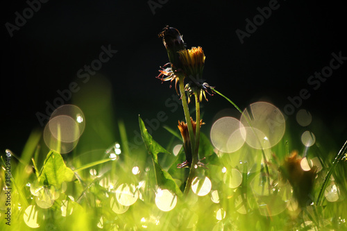 Fototapeta Morning dew on Autumn grass