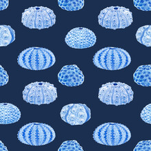 Beautiful Seamless Underwater Pattern With Watercolor Sea Urchin. Stock Illustration.