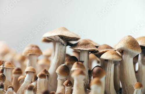 psychedelic magic mushrooms Wallpaper Mural