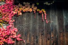 Herbstliches Buntes Weinlaub A...