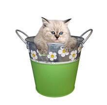 A Kitten Is Inside A Green Met...