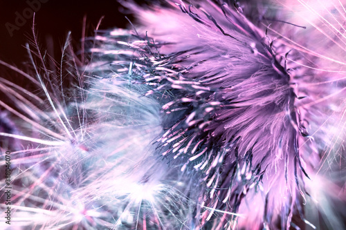 Photo Beautiful abstract flower burdock on a colorful background