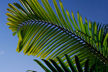 Abstract Image Of Palm Leaves ...