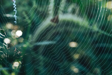 Cobweb Or Spider's Web Against...