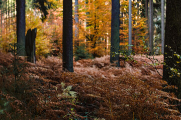 Herbst Wasser und Wald