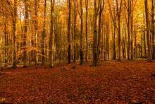 Las Jesień Drzewa Bory Park Buki Olchy światło Cień Złota Pora Roku żółty Pomarańczowy Jesienią Spacer Polska