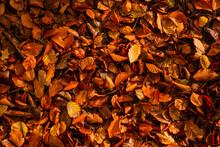 Liście Tekstura Tło Las Jesień Drzewa Bory Park Buki Olchy światło Cień Złota Pora Roku żółty Pomarańczowy Jesienią Spacer Polska