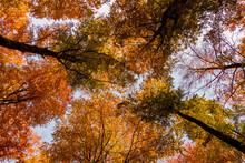 Las Korony Drzew Jesień Drzewa Bory Park Buki Olchy światło Cień Złota Pora Roku żółty Pomarańczowy Jesienią Spacer Polska