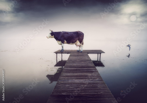 cow on the pier at the evening. Canvas Print