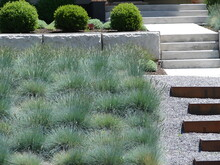 Xeriscape Landscape With Ornamental Grasses, Boxwood, Concrete And Steps