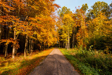 Las Droga Aleja Jesień Drzewa Bory Park Buki Olchy światło Cień Złota Pora Roku żółty Pomarańczowy Jesienią Spacer Polska