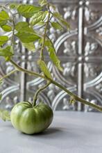 Green Tomato On Vine In Front Of Gray Background Metal Kitchen Backsplash