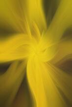 Abstract Twisted Light Background. Anime Effects Background Overlay Blend. Modern Fractal Floral Leaf Design Fantasy Majestic Background.