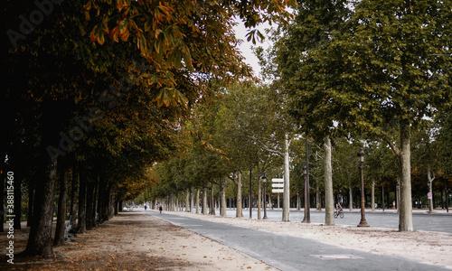 Slika na platnu Tree lanes along boulevard in Paris
