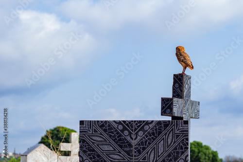 Fotografia Coruja sobre uma cruz em cemitério com céu azul e nuvens ao fundo