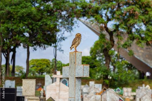 Fotografía Coruja sobre uma cruz em túmulo no cemitério.