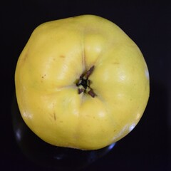 Pigwa jabłkowata odmiany Leskovacz