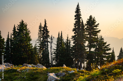 Beautiful grove of trees in the alpine with wildfire smoke at sunset