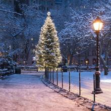 USA, New York, New York City, Illuminated Christmas Tree In Madison Square Park At Night