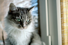 Cute Grey Cat Near Window
