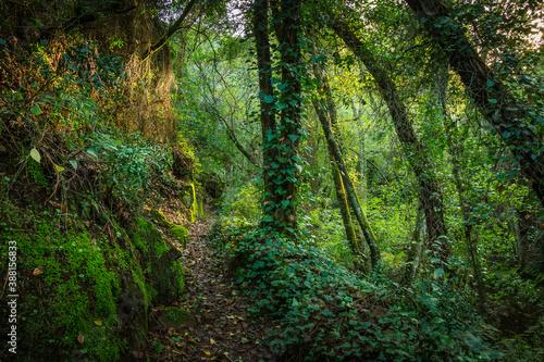 Obraz Beautiful forest with amazing green multiple vegetation - fototapety do salonu