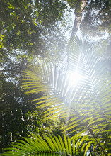 Light Shining Through Tropical Palms In Queensland, Australia