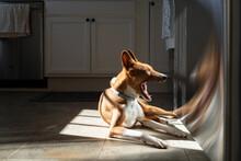 Dog Yawning In The Sun
