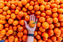 Hand Holding Satsuma Orange In...