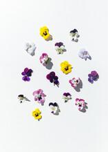 Garden Pansies On White Background
