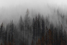 The Beachie Creek Fire Near The Santiam River In Oregon Left The Landscape Scorched And Bare