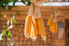 Close-up Of Hanging Dried Corn
