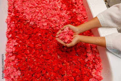 Foto Top view woman's hands holding red  flowers petals in bath tub in luxury bathroom in hotel
