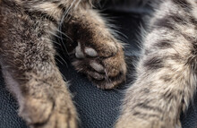 Close-up Of A Paw Of A Sleepin...