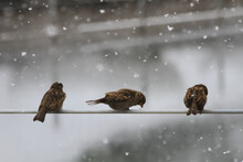 Birds On The Snow