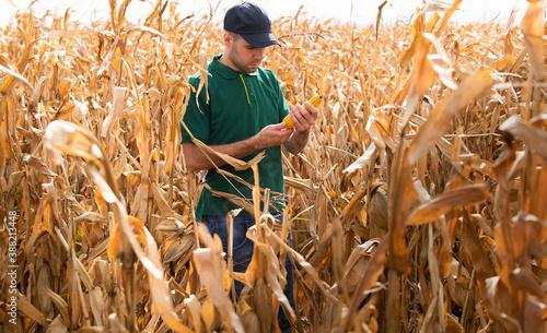 a farmer in a corn field before harvest Fototapete