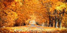 Wunderschöne Herbstallee