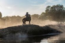 Wild Buffalos And Horses In Lake