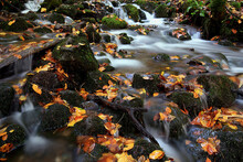Close View Autumn Leaves And R...