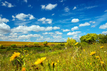 Summer Rural Landscape With Be...