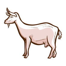 Goat, Wether Hand Drawn Icon. Domestic Animal, Mammal. Dairy Farm, Cheese Production. Livestock.