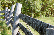 Old Fence With Moss In The Forest