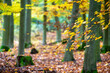 canvas print picture - Detail of beech branch with leaves in colorful autumn forest