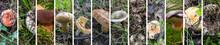 Wild Mushrooms Collage. Variou...