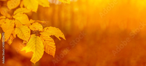 Photo Amazing autumnal autumn background banner panorama landscape - Golden October -F
