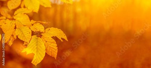 Obraz na plátne Amazing autumnal autumn background banner panorama landscape - Golden October -F