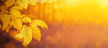 Amazing Autumnal Autumn Backgr...