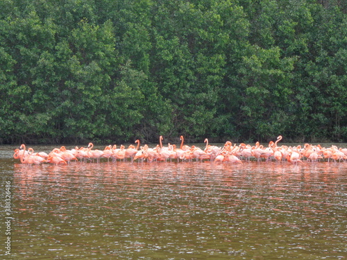 Foto The mangroves and flamingo herds of Celestun in the Gulf of Mexico, Yucatan