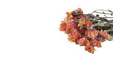 Bouquet Of Dead Flowers Isolat...