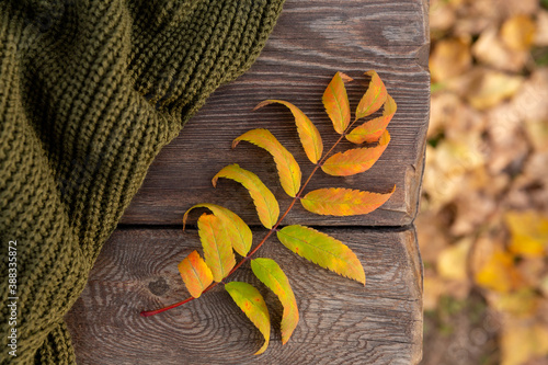 an autumn yellow leaf and green knitted sweater lie on planks of rough wooden bench, in rays of sunset. Autumn background or postcard.