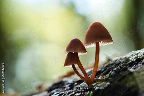 Fotografering Mushrooms growing out of a tree trunk.